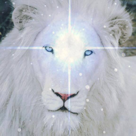 8/8 Lions Gate 2019 : Complete Embodiment of the Soul as we
